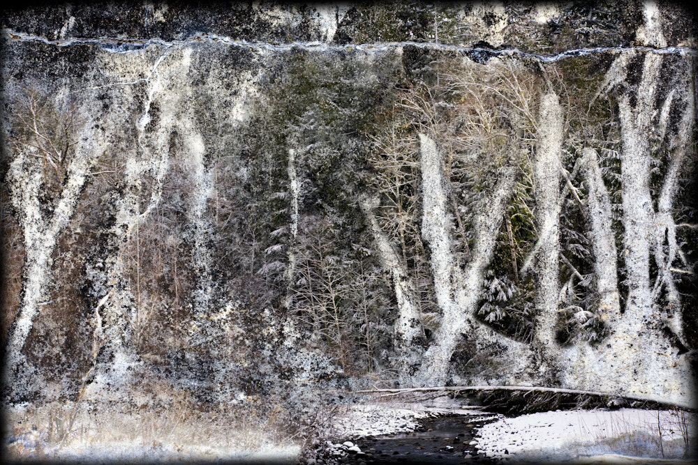 Photograph Forest Wall by Ric Peterson on 500px