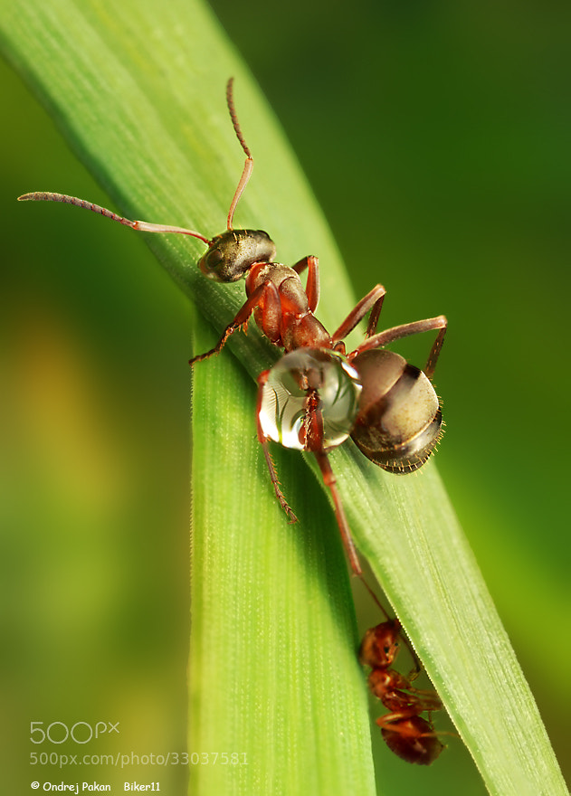 Photograph Ant slide by Ondrej Pakan on 500px
