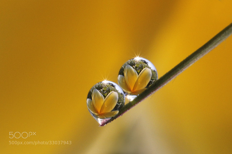Photograph Two flower inside by Diens Silver on 500px