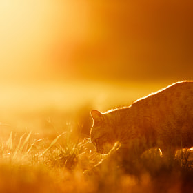 Born to be free by Seiji Mamiya on 500px.com
