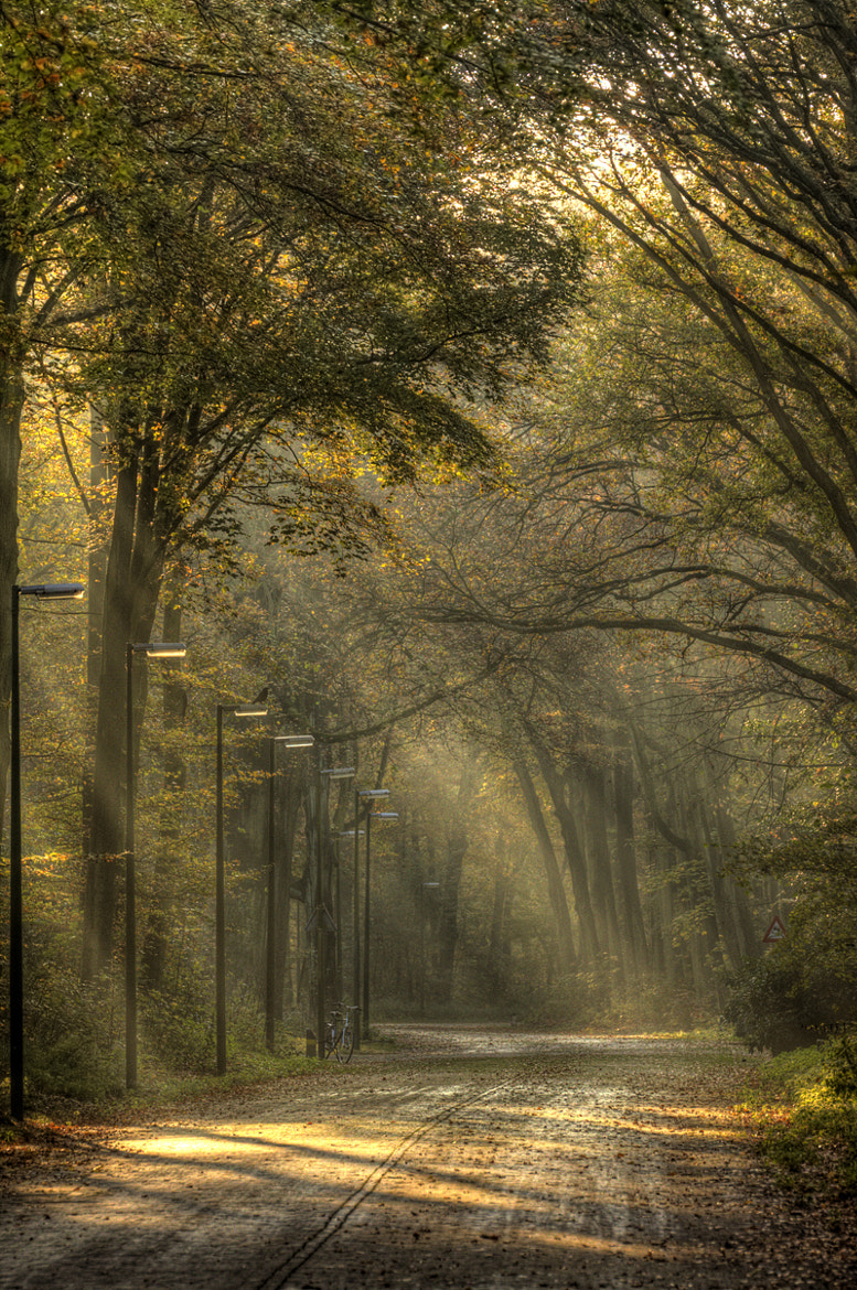Photograph Autumn Forest by Christiaan Slot on 500px