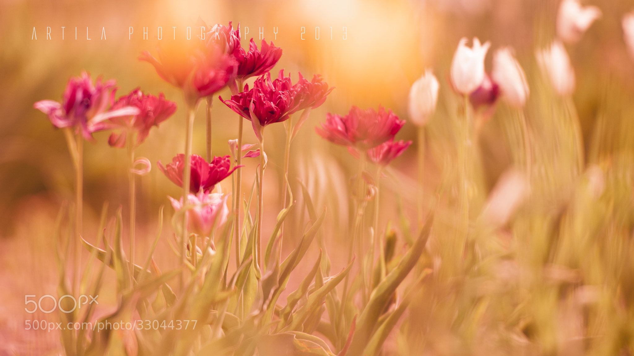 Photograph Flowers by artila photography on 500px