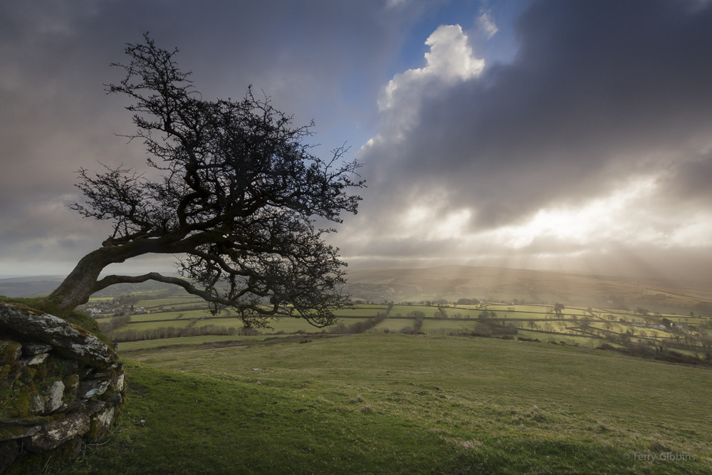 Photograph Moor light by Terry Gibbins on 500px