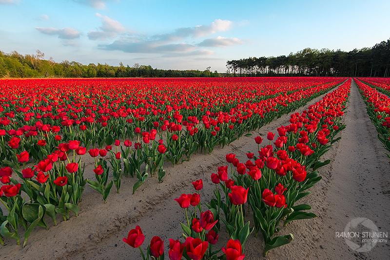 Photograph Dutch beauty! by Ramon Stijnen on 500px