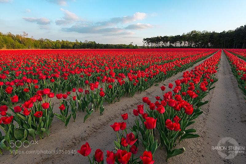Photograph Dutch beauty! by Ramon Stijnen on 500px