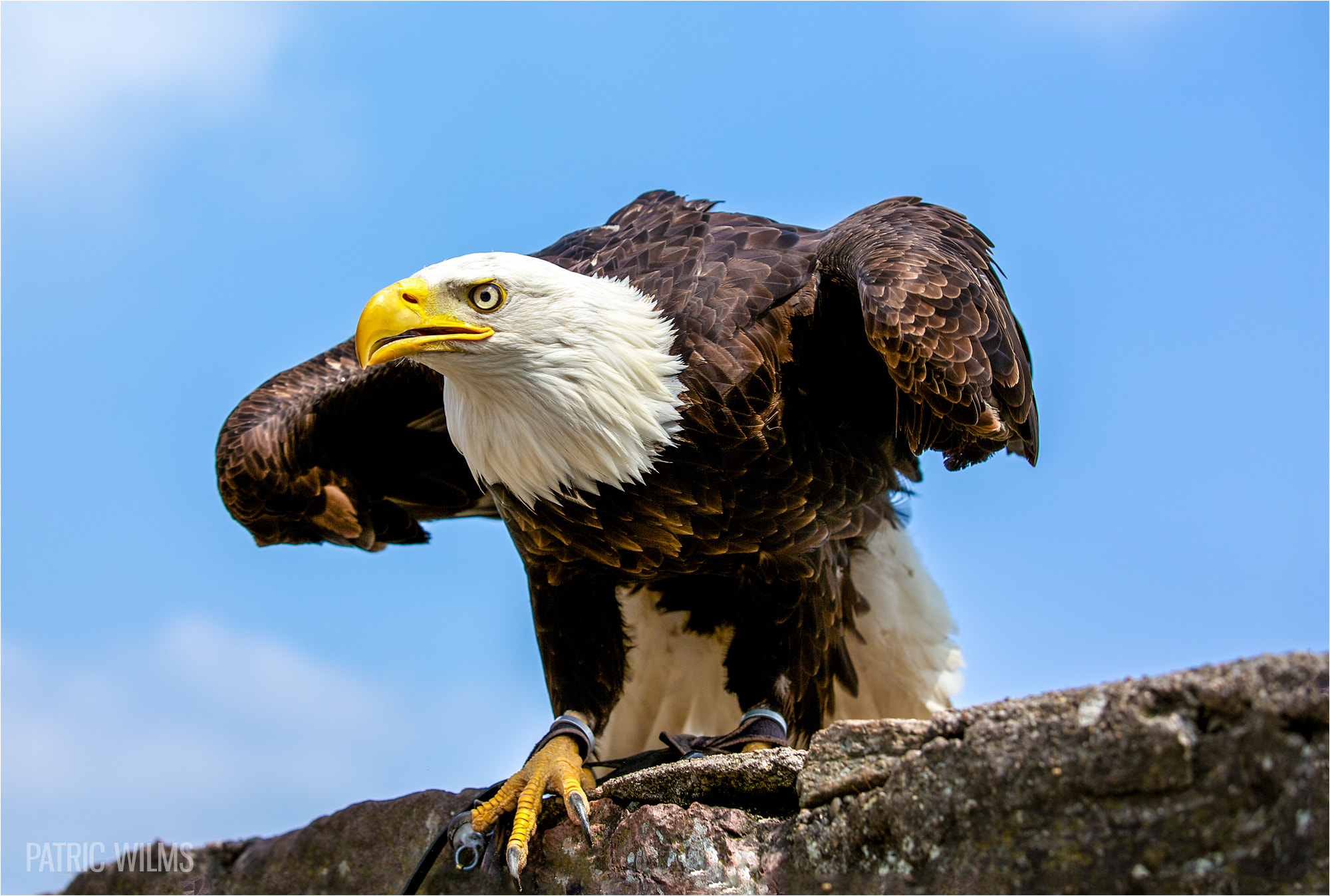 Photograph Eagle by Patric Wilms on 500px