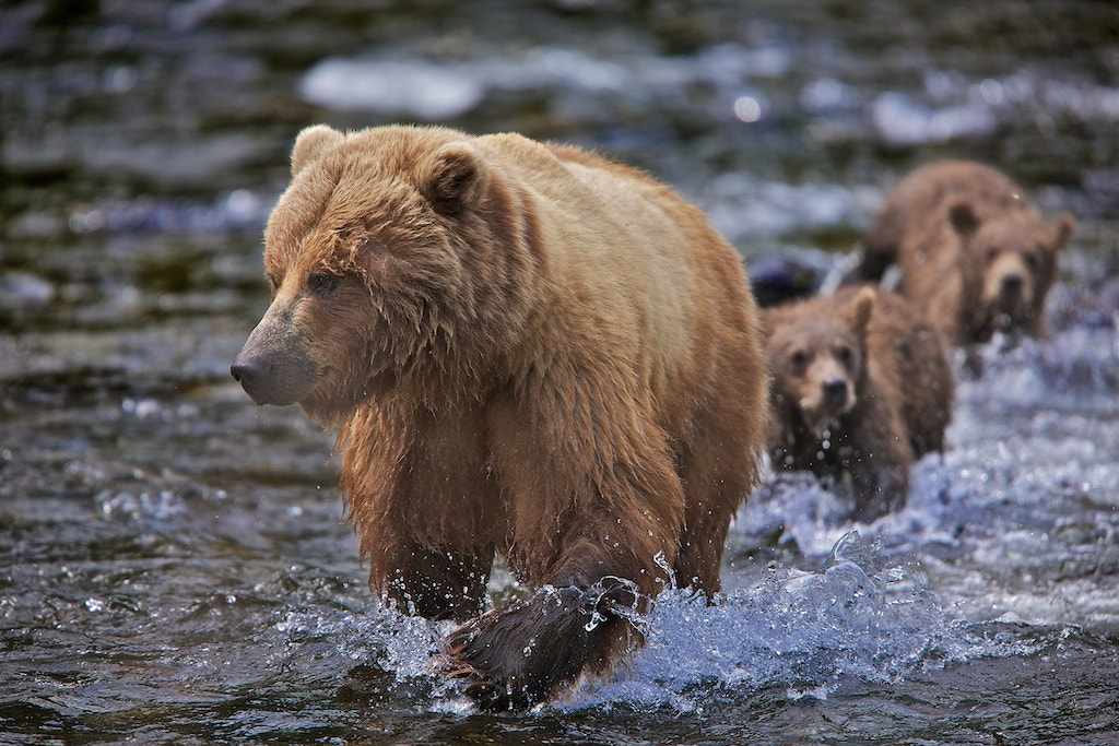 Photograph The Family March by Buck Shreck on 500px