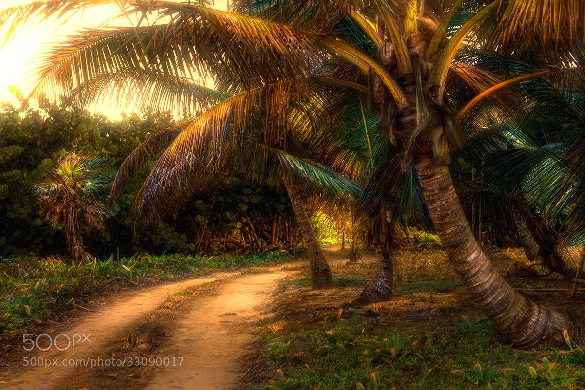 Photograph country road by Alexsander BB on 500px