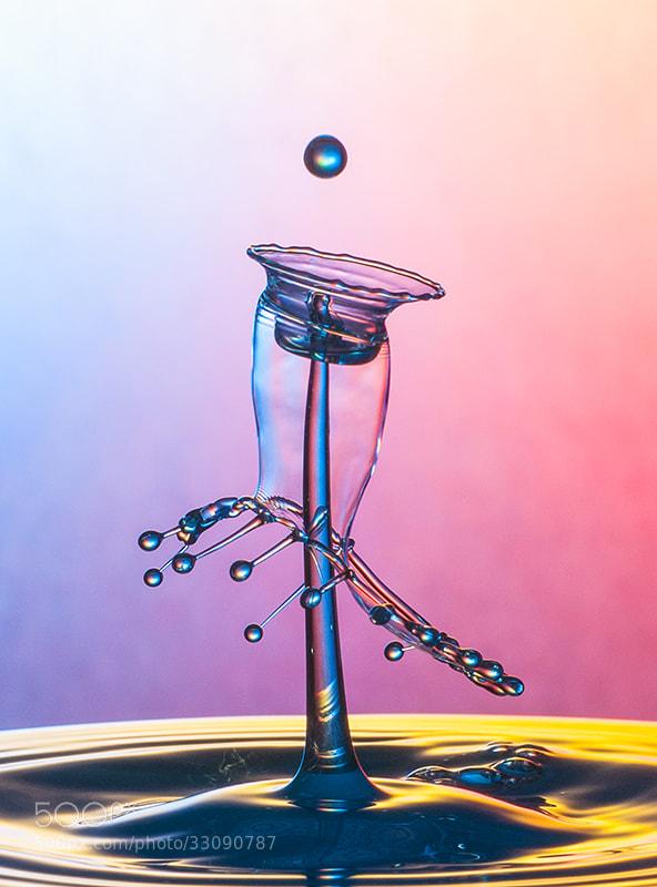 Photograph jellyfish by mustafa yagci on 500px