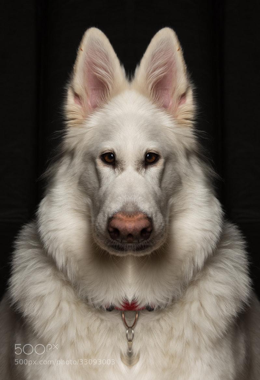 Photograph Guard dog! by Frank Rønsholt on 500px