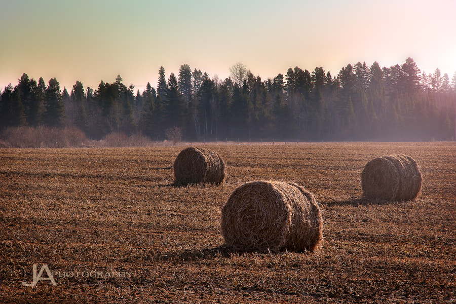 Photograph Early Morning Hay Day by Joe Ayotte on 500px