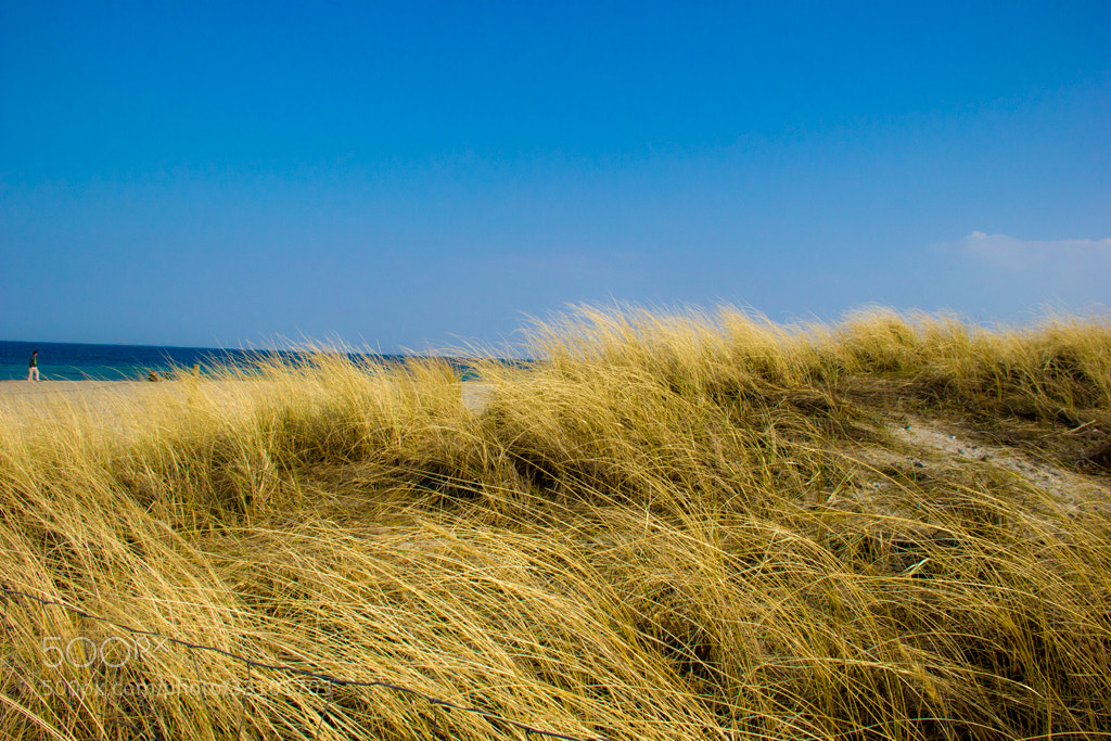 Photograph Gold Grass by Aditya Saraswat on 500px