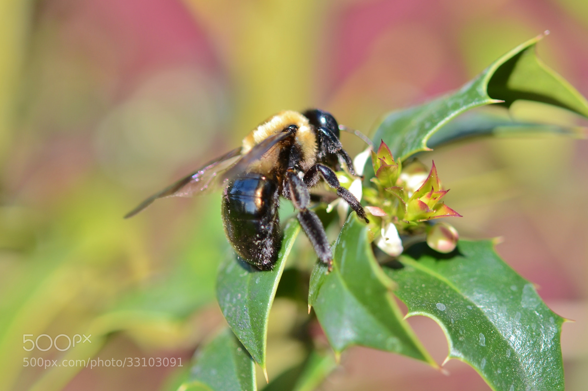"""Photograph """"BUSY AS A BEE"""" by David Texter on 500px"""