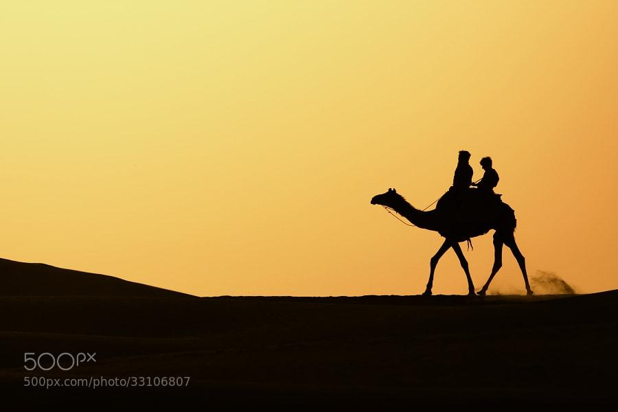 Photograph Camel by Tibor Popela on 500px
