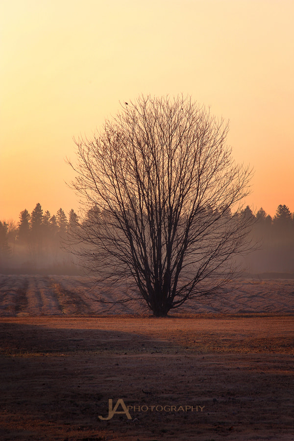 Photograph Misty Morning Tree by Joe Ayotte on 500px