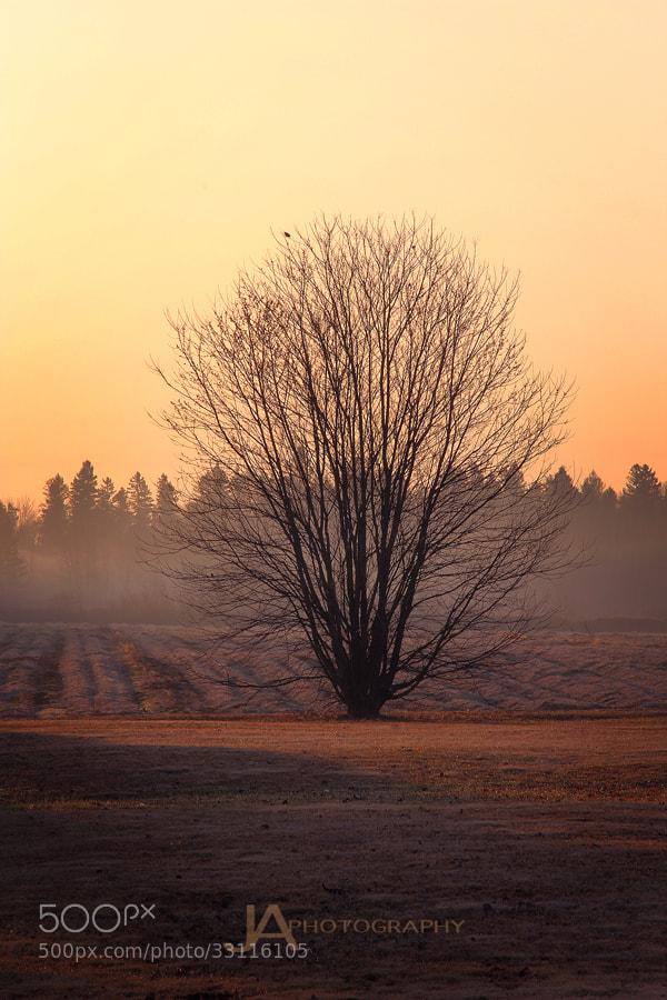 Photograph Misty Morning Tree by Joe Ayotte on 500px
