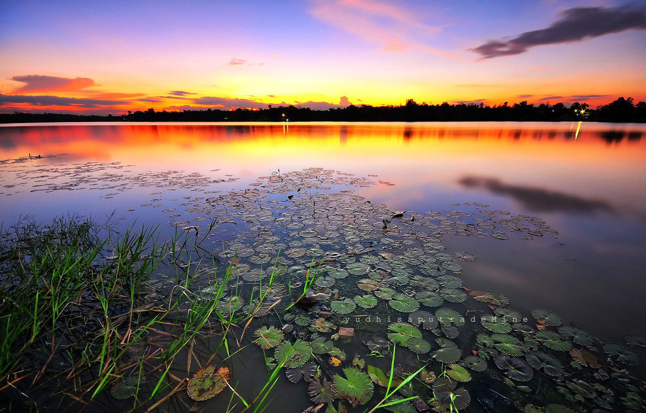Photograph Lotus Sunset by Yudhisa Putra on 500px