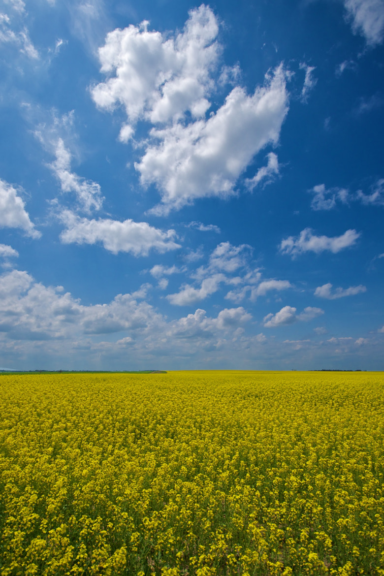 Photograph Canola Sky by Mike Fuhr on 500px