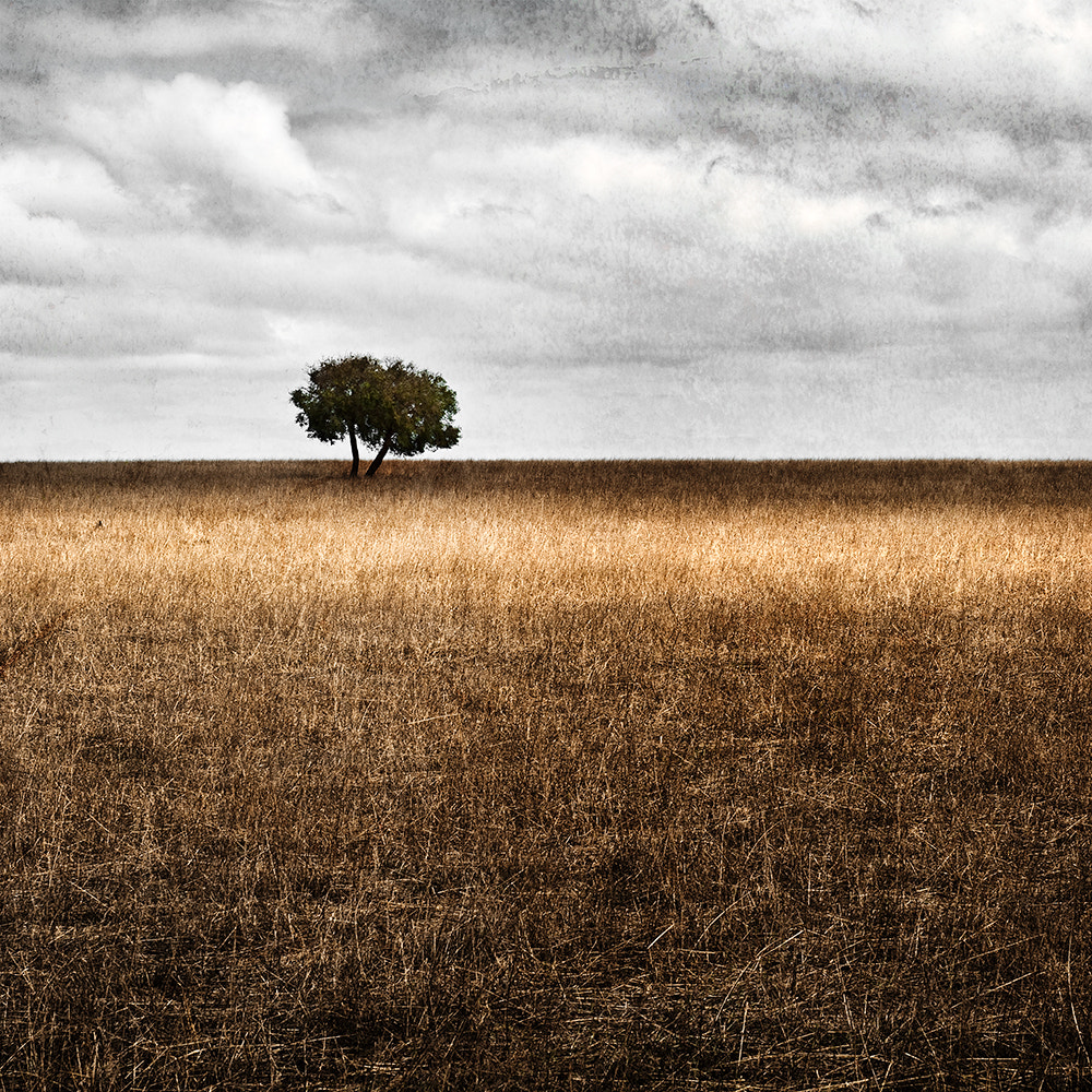 Photograph Lone Tree by SaulVisuals on 500px