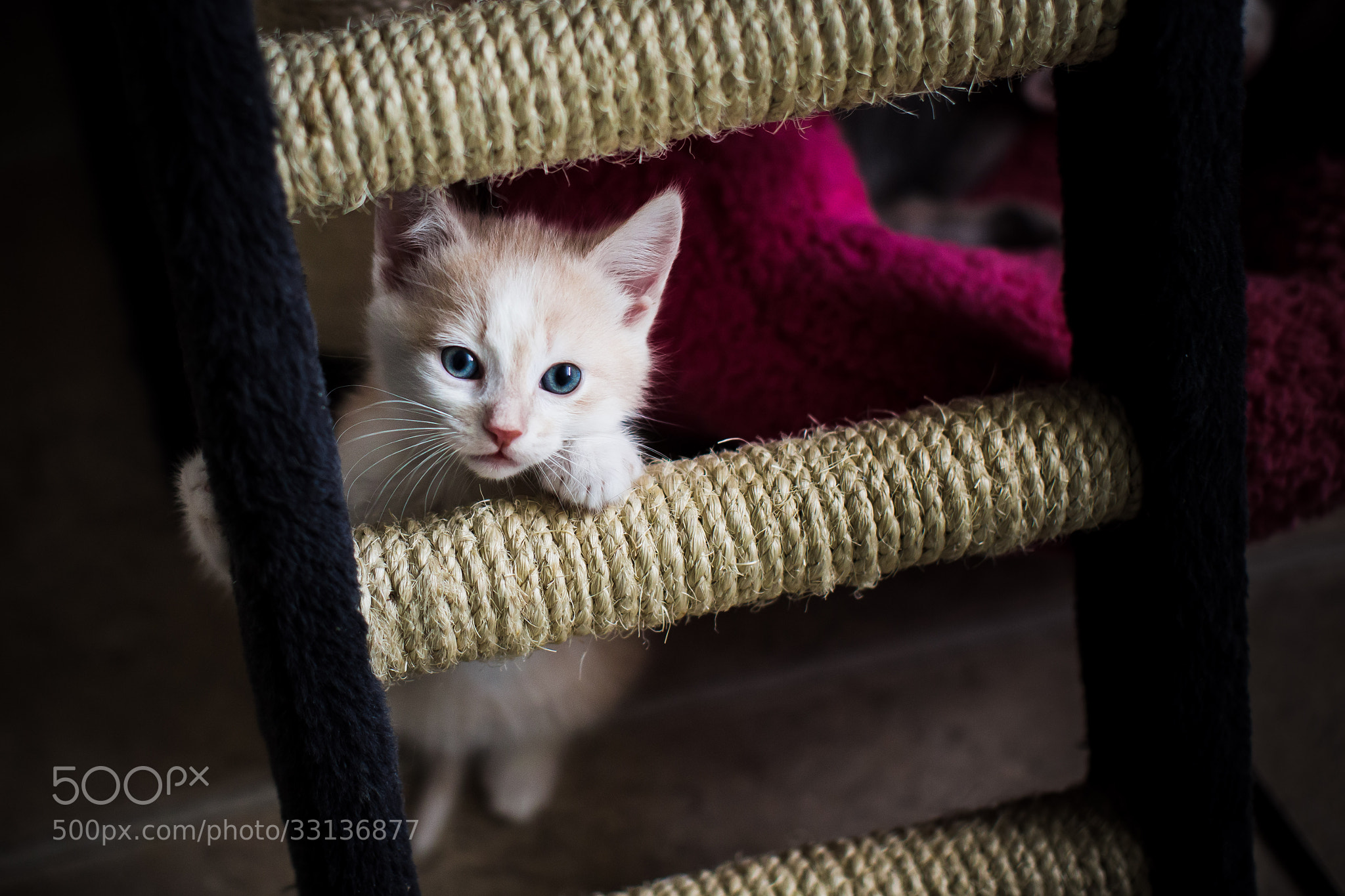 Photograph Kitten introduced to the world by Lee Ys on 500px