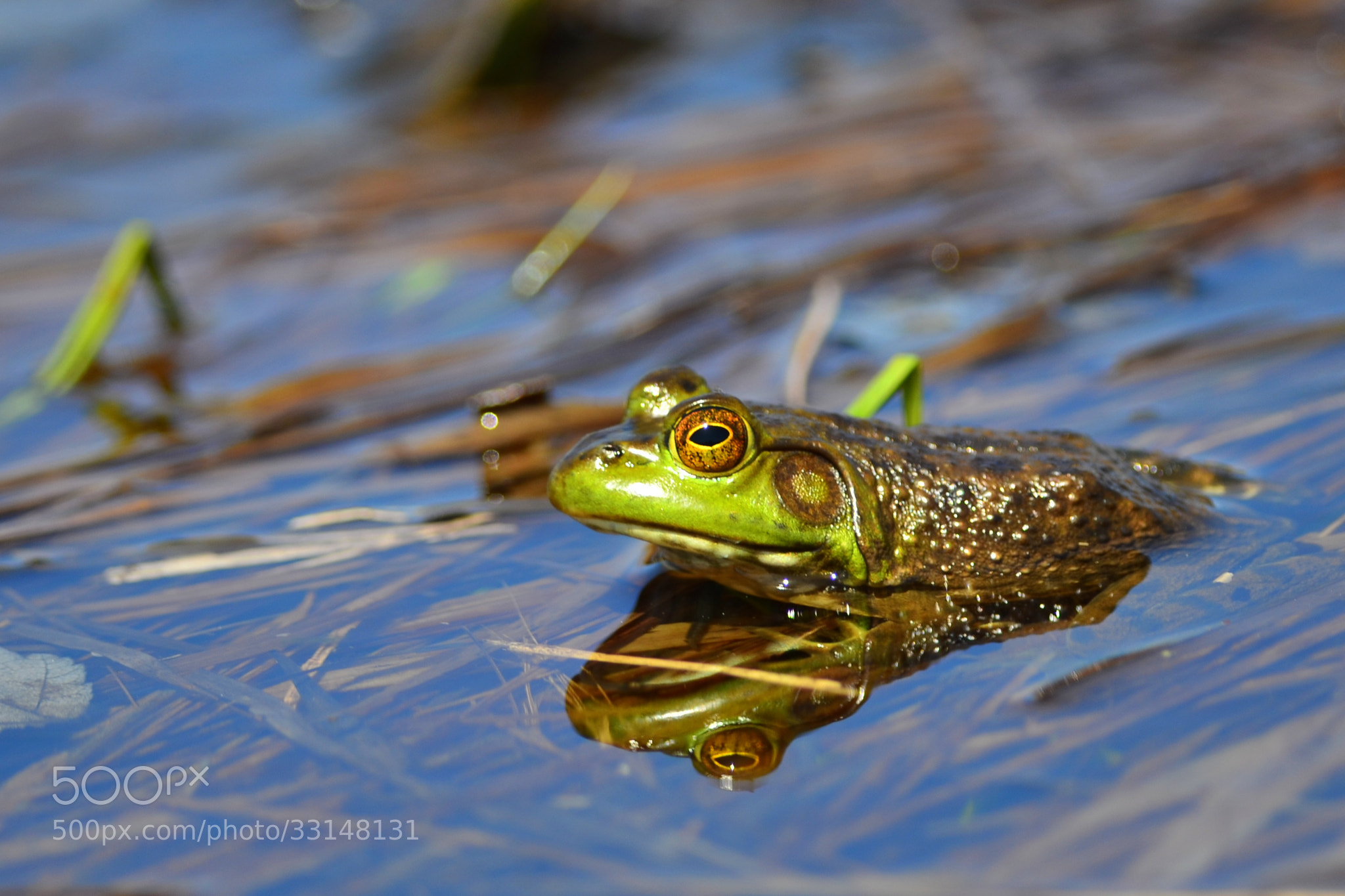 Photograph Frog2 by Eric Le Bel on 500px