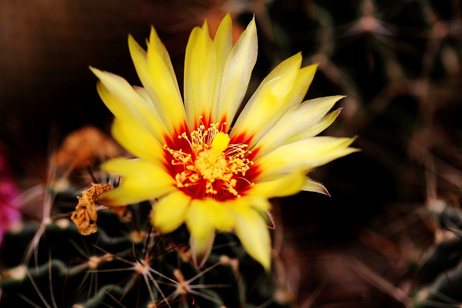 Photograph Flower25 by Zhu xiao ping on 500px