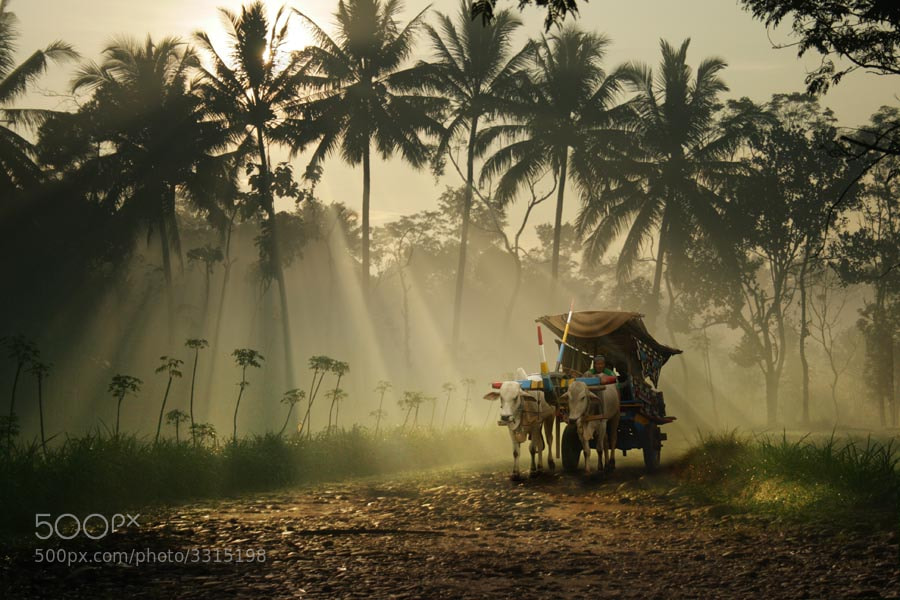 Photograph morning spirit by budi 'ccline' on 500px