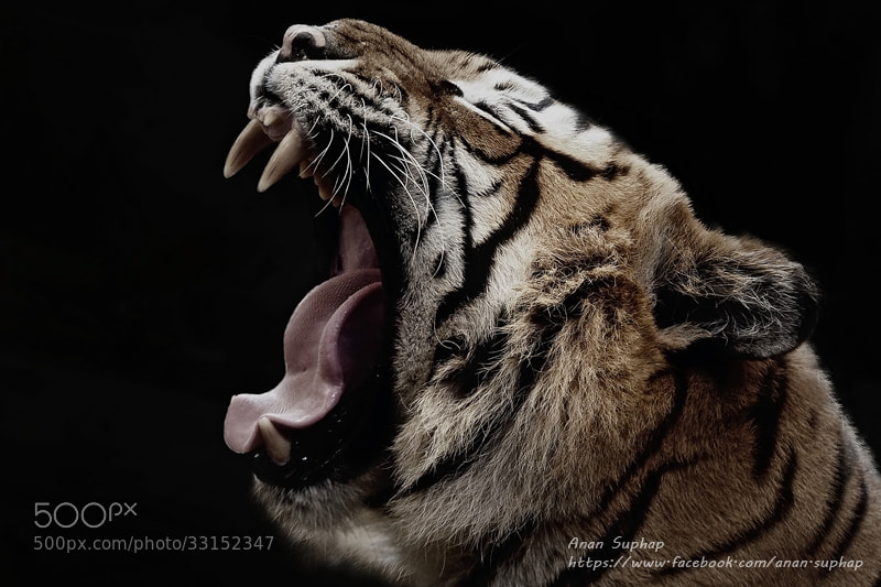 Photograph Yawn by Anan Suphap on 500px