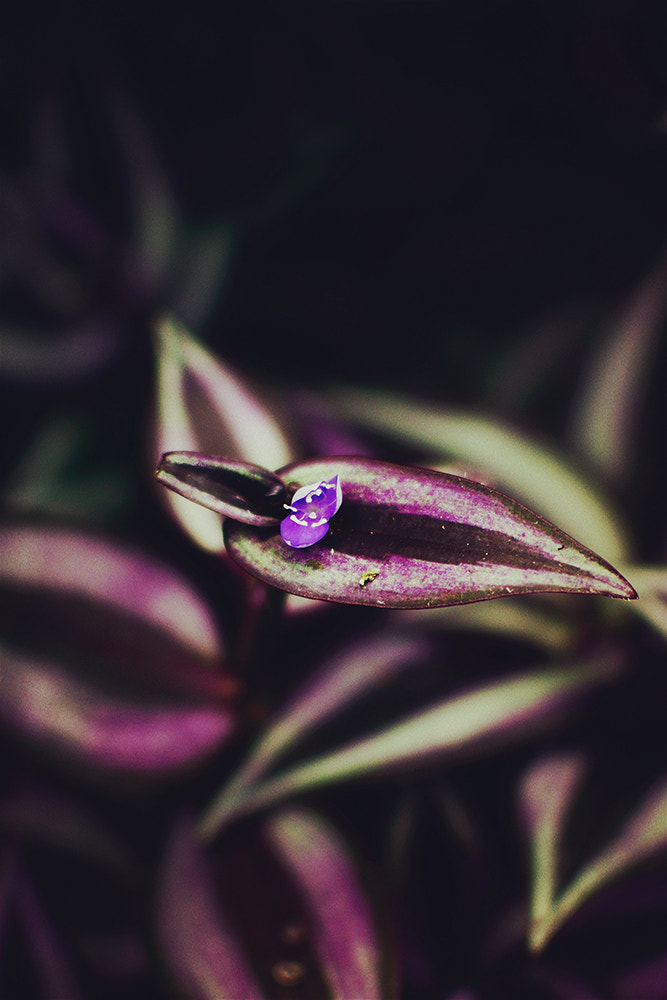 Photograph Little purple by Grace Thang on 500px