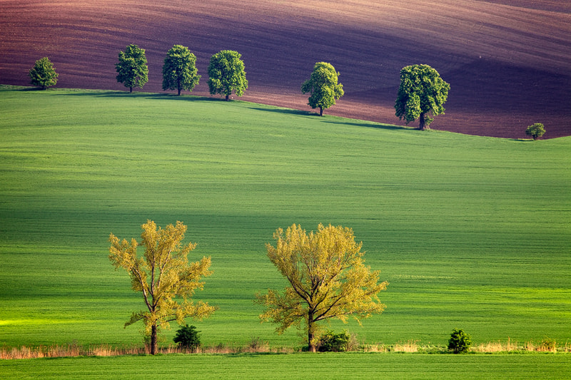 Photograph Moravian Spring by Martin Rak on 500px