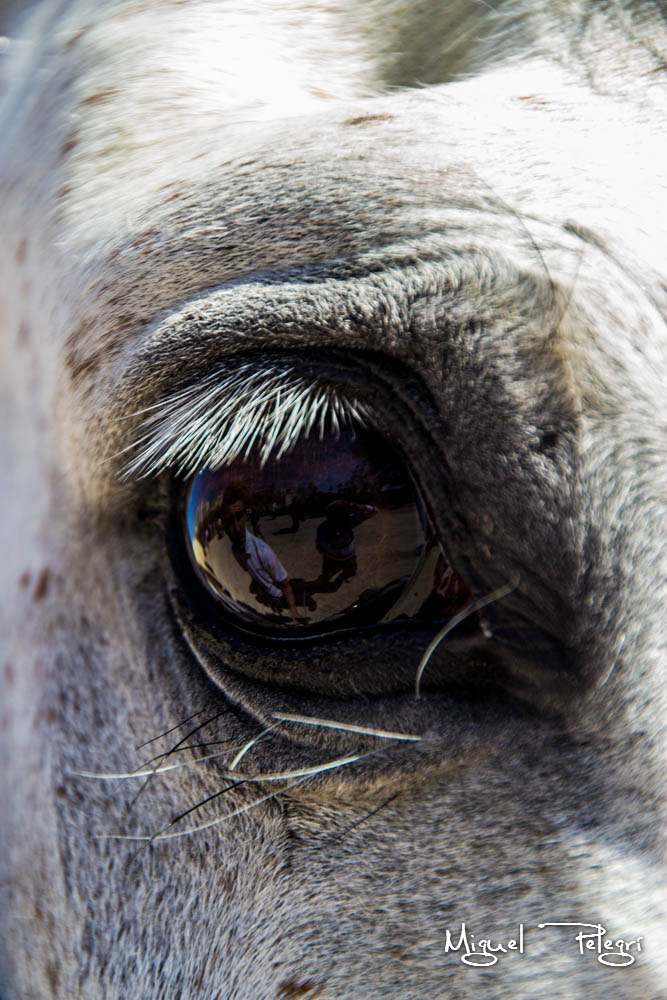 Photograph Caballo by Miguel Pelegrí Gil on 500px