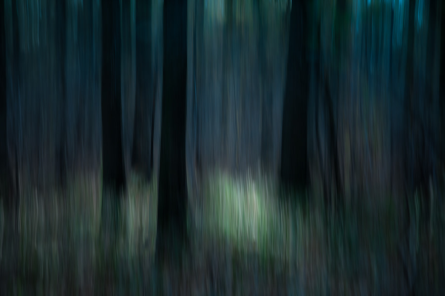 Photograph forest of the gils by Gilbert Claes on 500px