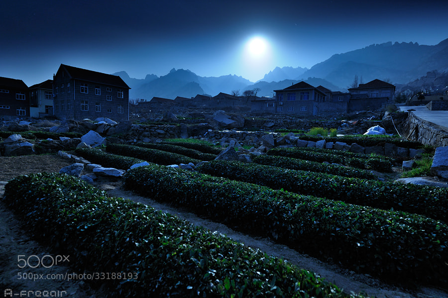 Photograph Tea garden in the moonlight by A- freeair on 500px