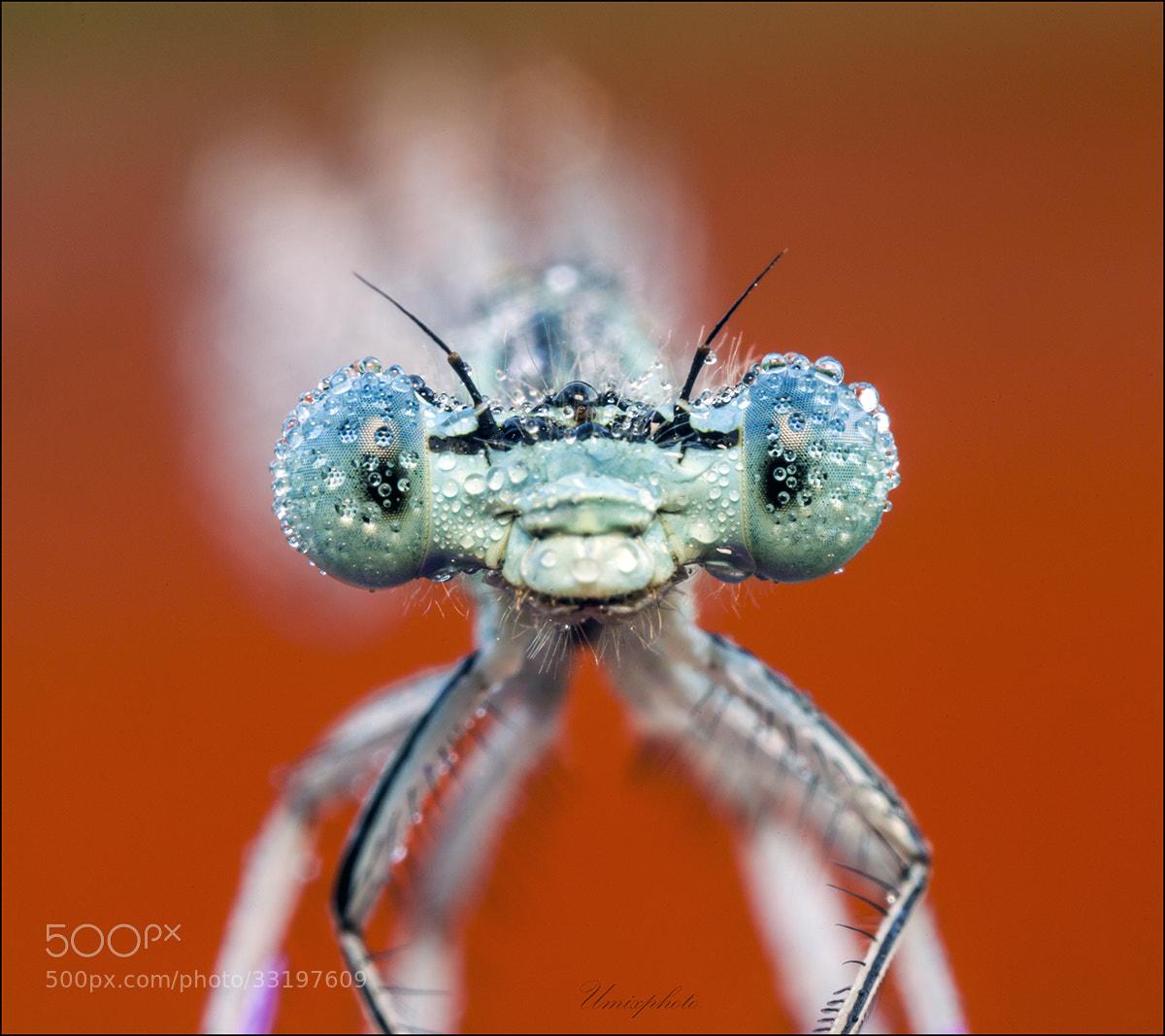 Photograph Blue Eyes in Red by Jaro Miščevič on 500px