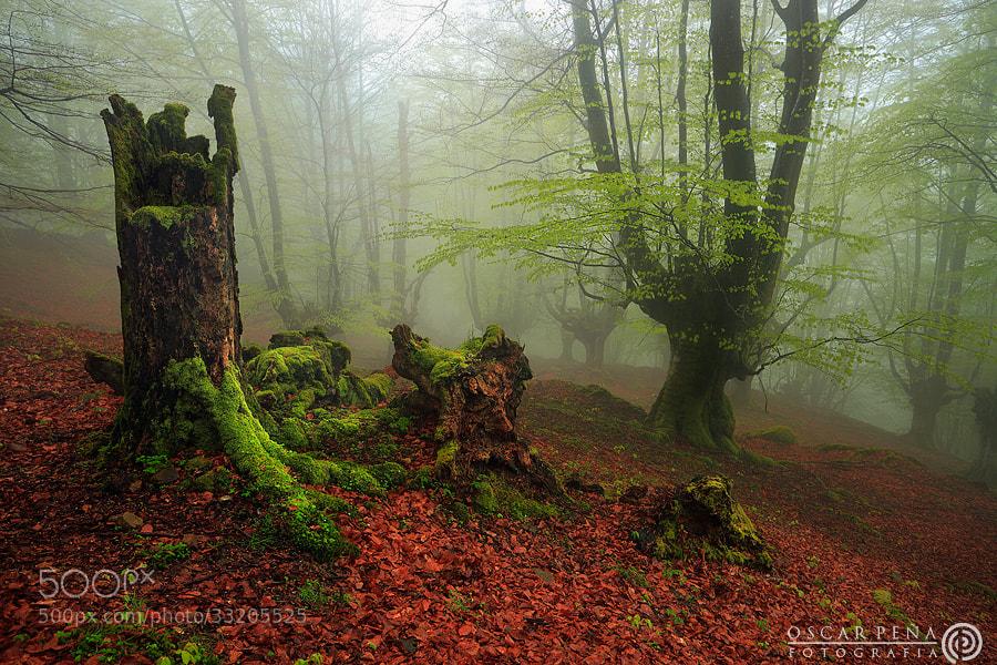 Photograph - Renovación verde - by Oscar  Peña on 500px