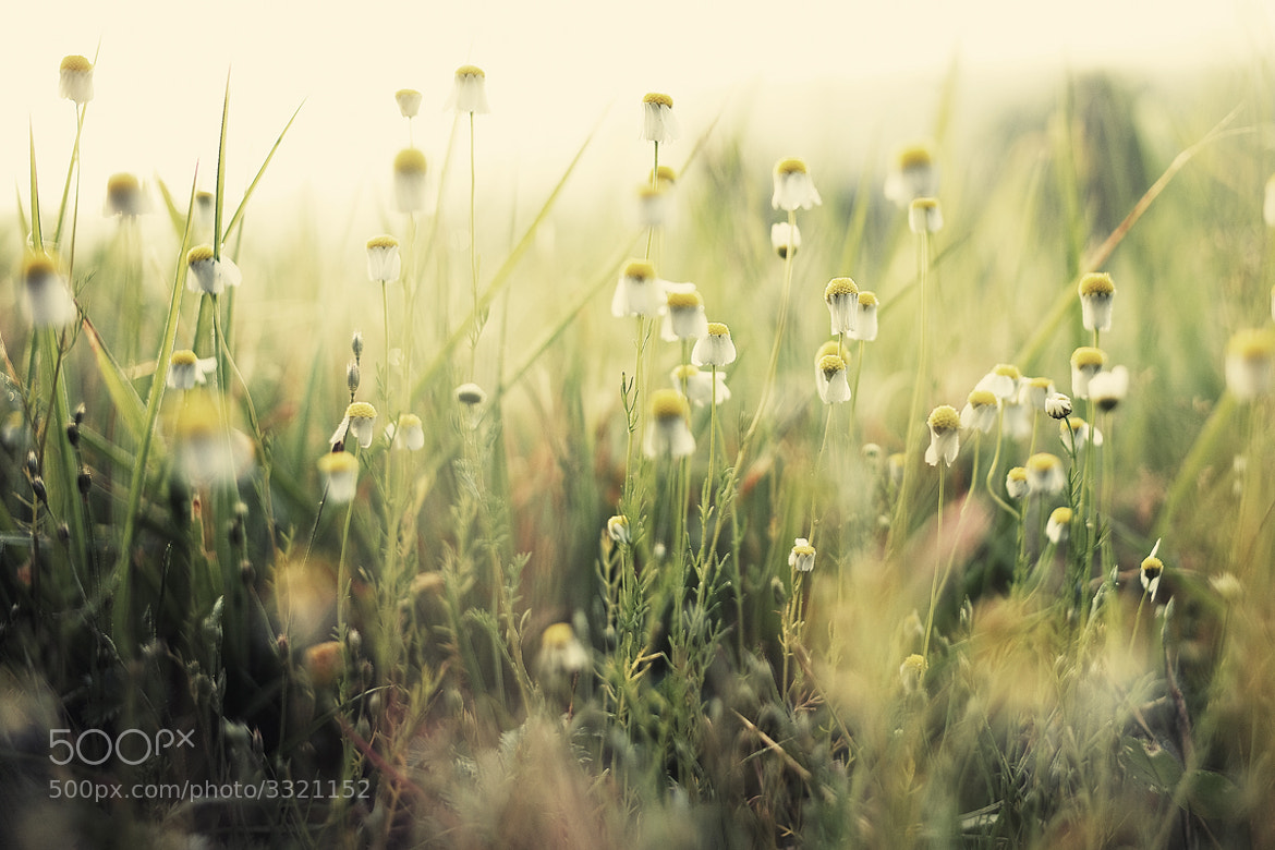 Photograph Meadow by Kristofer Ristolainen on 500px