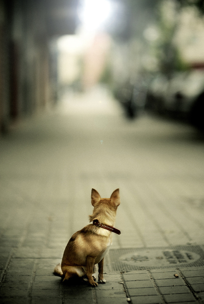 Photograph Dog way by Manuel Orero on 500px