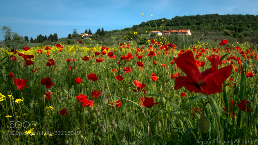 Photograph the poppy field by Sergio Verzier Photography on 500px