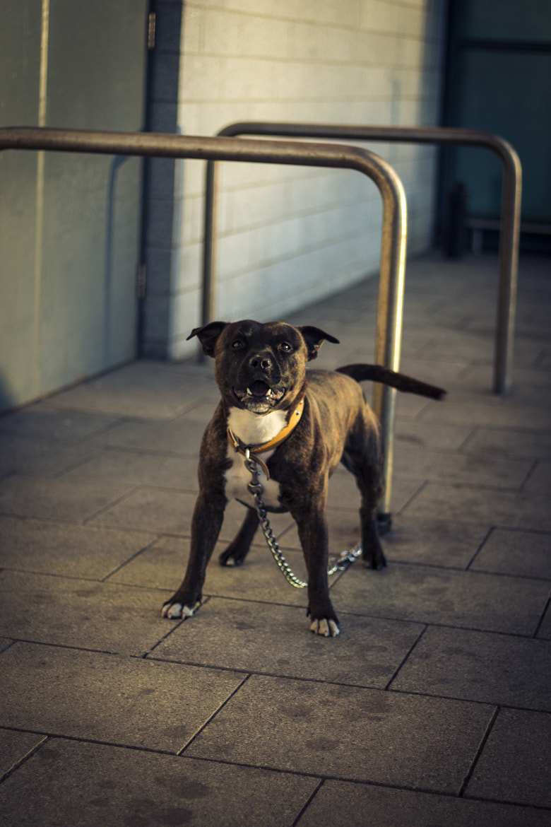 Photograph Chained Doggy by Gordon Foley on 500px