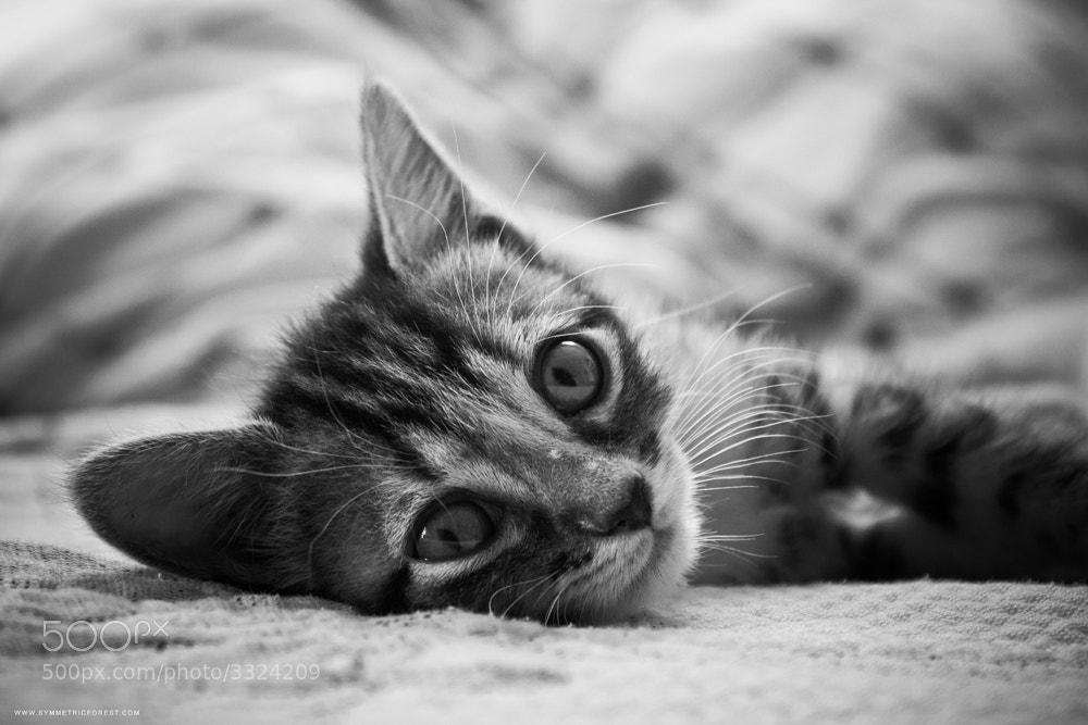 Photograph Sookie Cat! by Daniel Vergara on 500px
