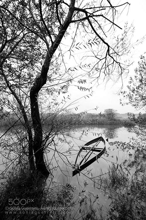 Photograph In memoriam by Sónia Guerreiro on 500px