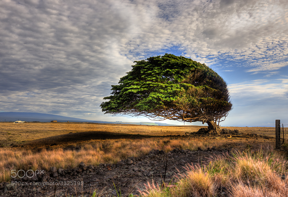 Photograph Wind Swept at South Point by Steve Skinner on 500px