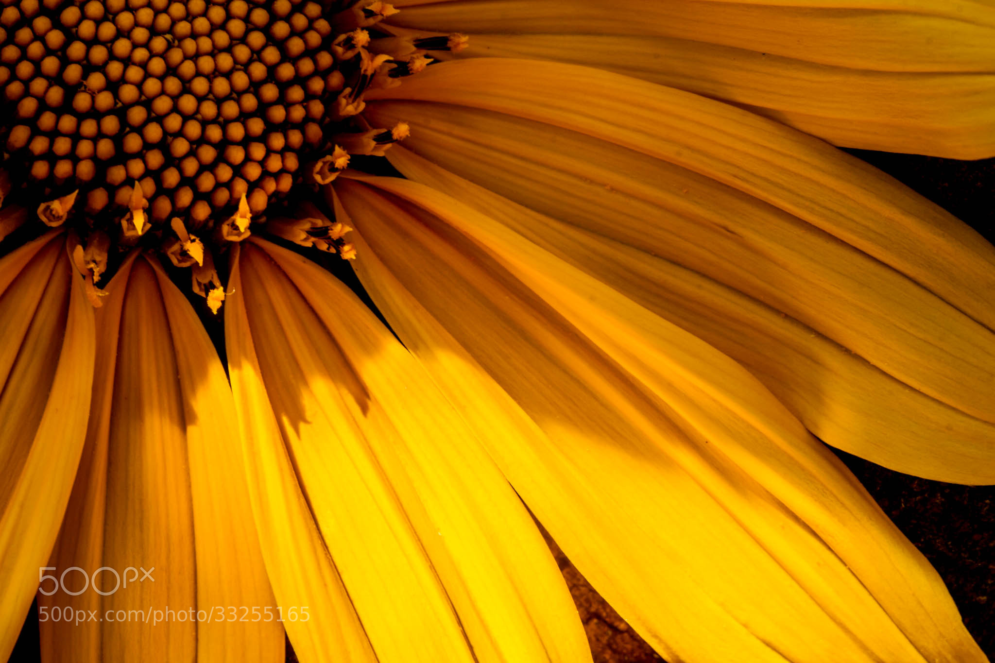 Photograph Flower by Paolo Oliviéri on 500px