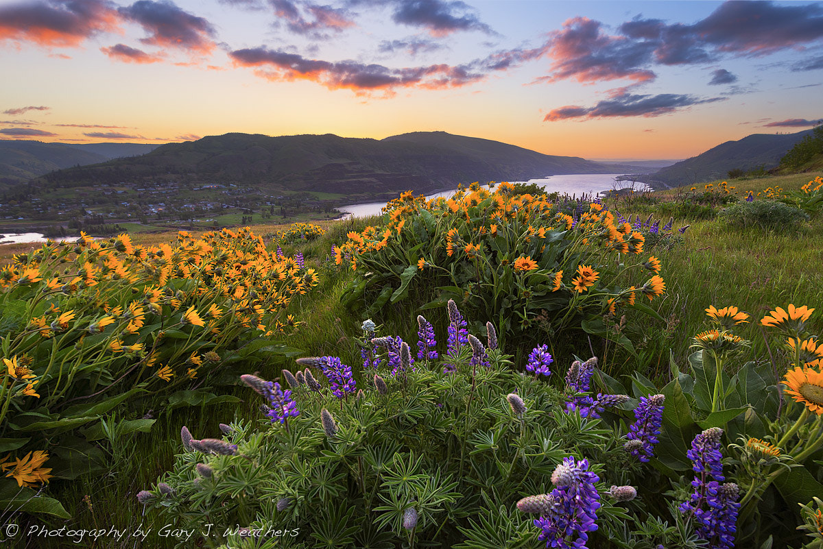 Photograph Sunrise at Rowena Crest, Oregon. by Gary Weathers on 500px