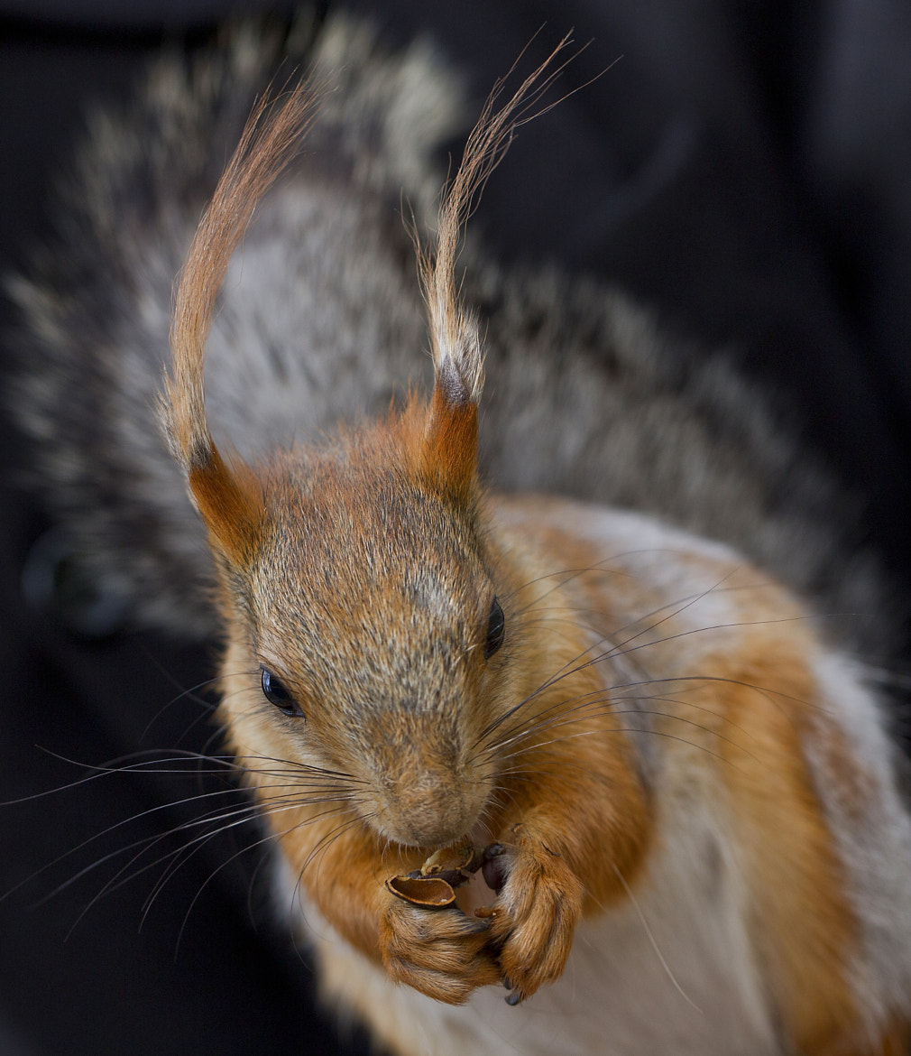 Photograph Squirrel again...) by Margo Rita on 500px