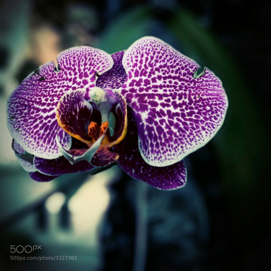 Photograph Orchid by Gunawan HP on 500px