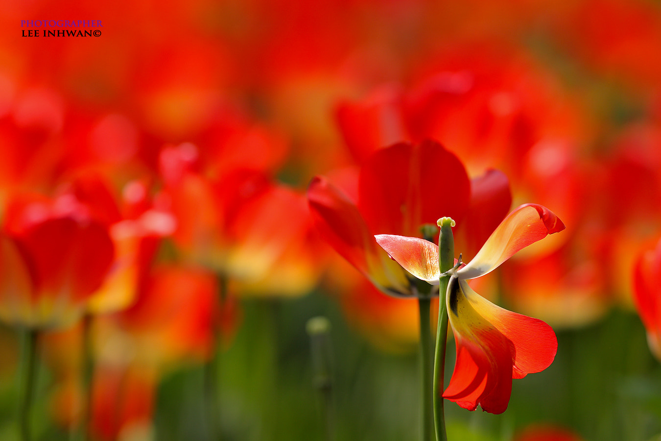 Photograph Burning red by LEE INHWAN on 500px