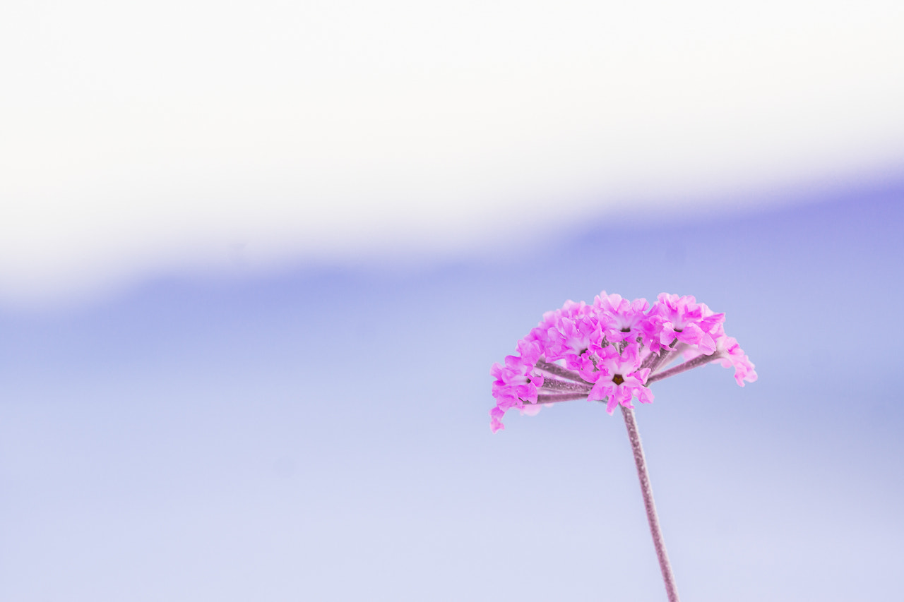 Photograph Just a Single Gal by Kelly Smith on 500px