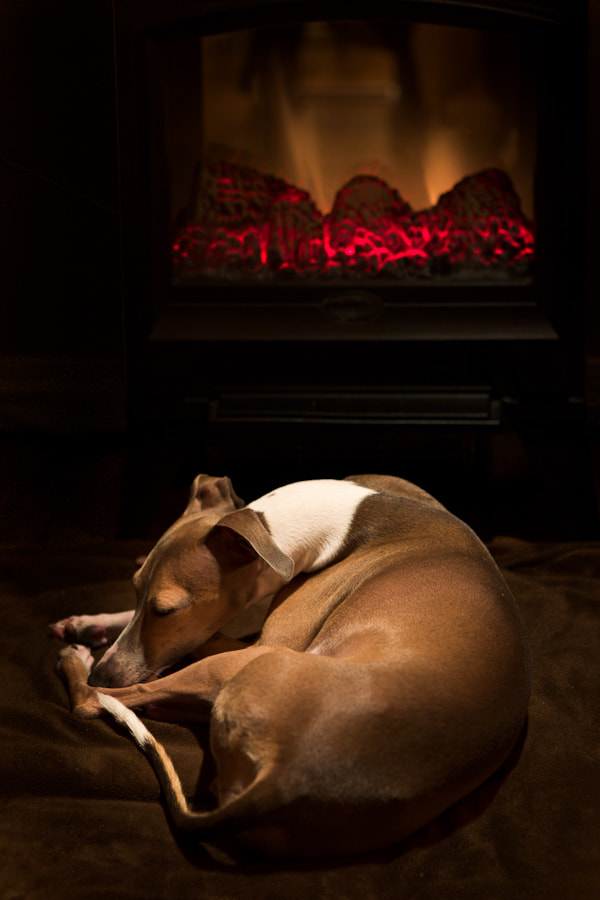 Ana having a winter nap by the faux fireplace.