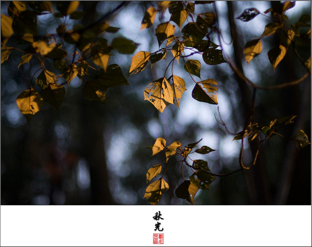 Photograph Light of Autum by William Lau on 500px